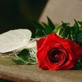 七夕情人节送女朋友什么礼物浪漫有意义